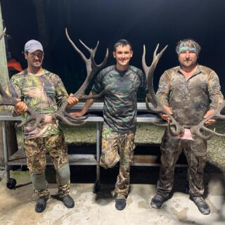 Hard work paid off for these two stud Red Stags! #claygullyoutfitters #exotichunting #redstag #redstaghunting #trophyhunting #hunt #huntflorida #gooutdoors #hunting